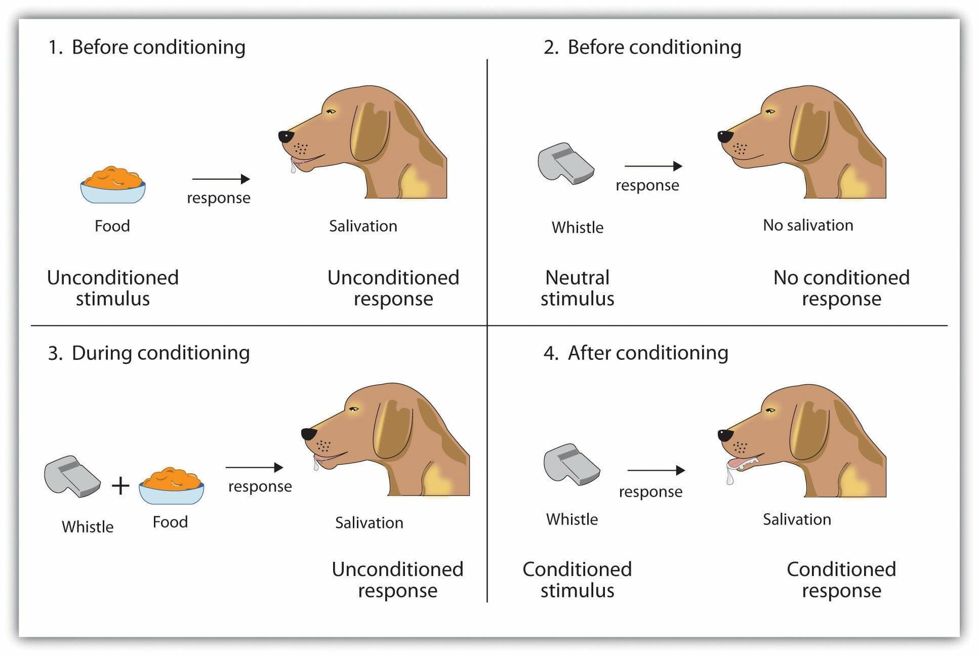 Classical Conditioning - Classical Conditioning or Stimulus-Organism-Response (SOR)