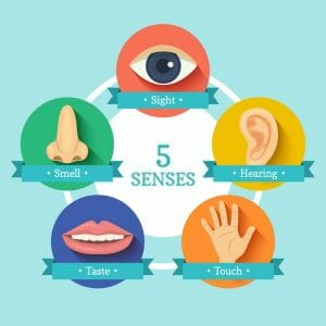 primary senses 460x460 - How to become a powerful leader with Hypnosis and NLP?